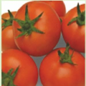 Vegetable Seeds - SAMPURNA TOMATO