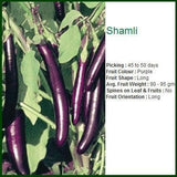 Vegetable Seeds - SHAMLI BRINJAL