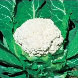 Vegetable Seeds - SNOW MYSTIQUE CAULIFLOWER F1