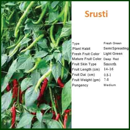 Vegetable Seeds - SRUSTI CHILLI