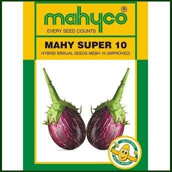 Vegetable Seeds - SUPER 10-MEBH 10 BRINJAL