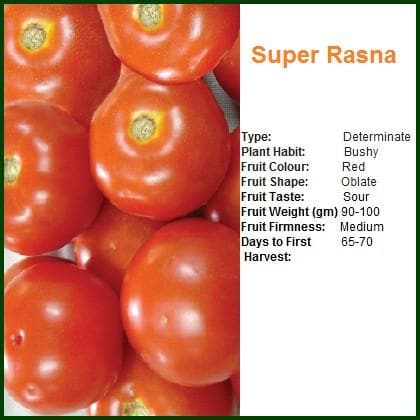 Vegetable Seeds - SUPER RASNA TOMATO
