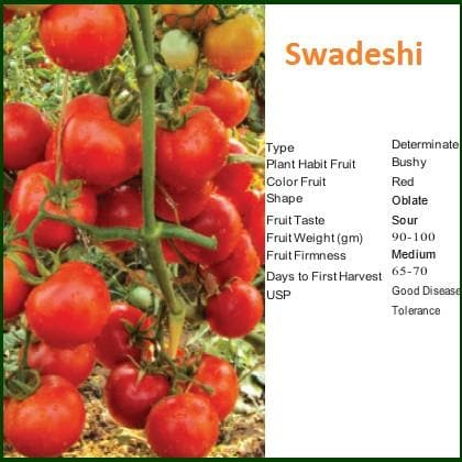 Vegetable Seeds - SWADESHI TOMATO