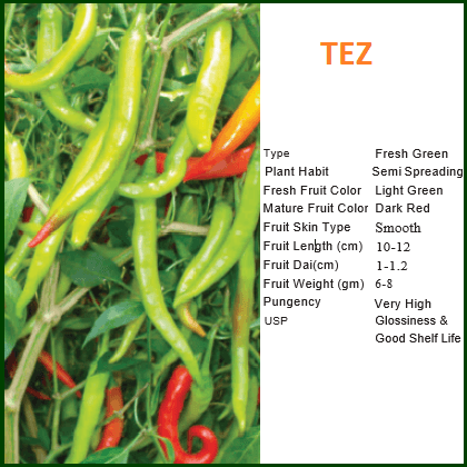 Vegetable Seeds - TEZ CHILLI
