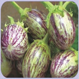 Vegetable Seeds - TRISHUL BRINJAL