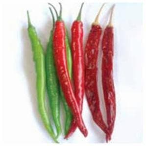 Vegetable Seeds - US 611 CHILLI