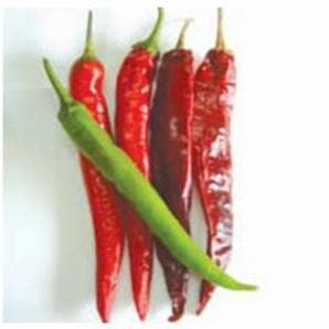 Vegetable Seeds - US 720 CHILLI