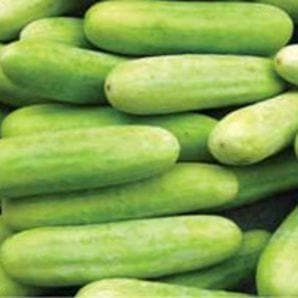 Vegetable Seeds - US 800 CUCUMBER
