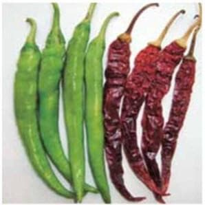 Vegetable Seeds - US 918 CHILLI