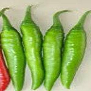 V 33 CHILLI - BigHaat.com