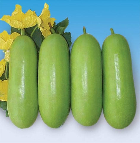 Vegetable Seeds - WAX GOURD