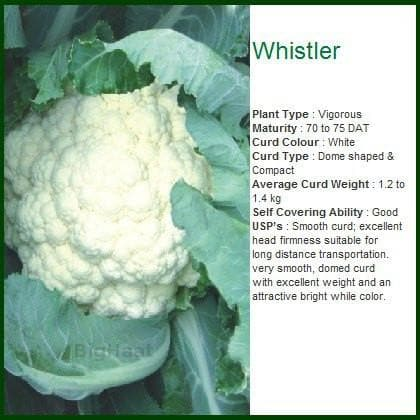 Vegetable Seeds - WHISTLER CAULIFLOWER