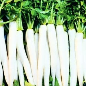 Vegetable Seeds - WHITE MARVEL