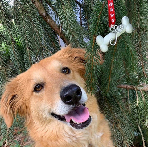 Dog Posing in front of tree with Ornament