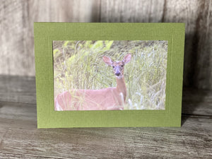 Oh Deer at the Bog-Plymouth Cards