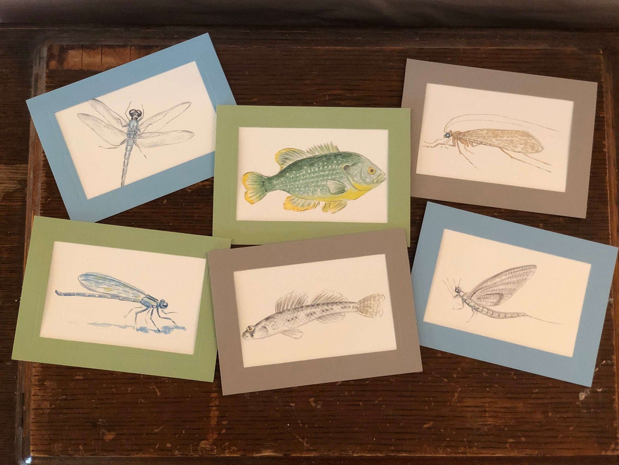Fish and Aquatic Insects - 6 pack-Greeting Card-Plymouth Cards