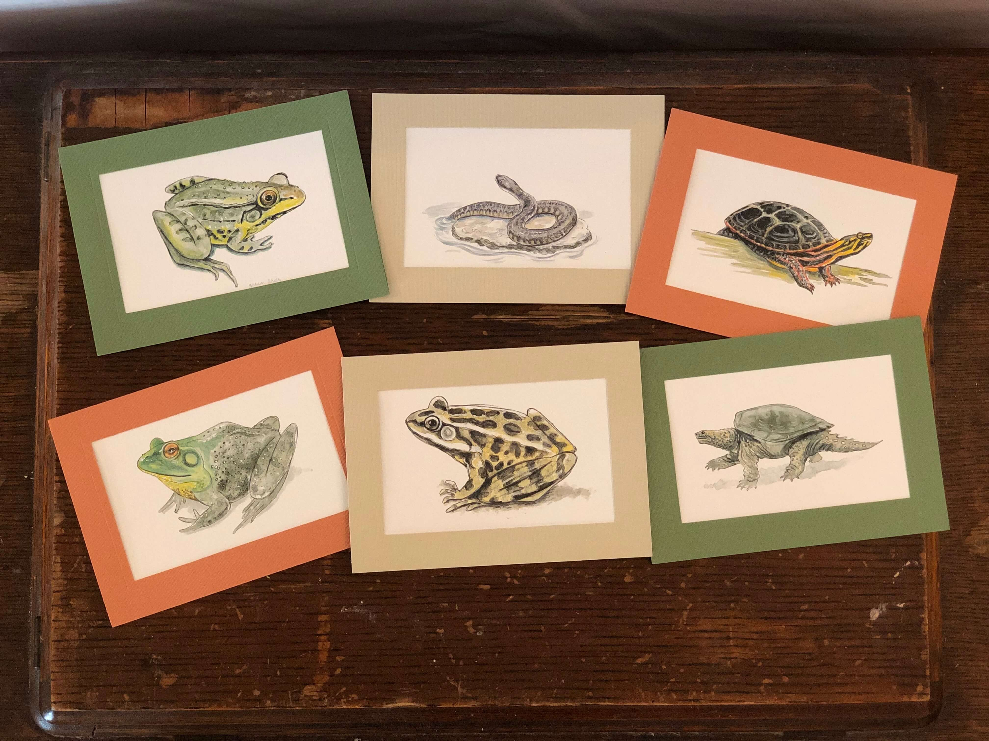 Reptiles and Amphibians - 6 pack-Greeting Card-Plymouth Cards
