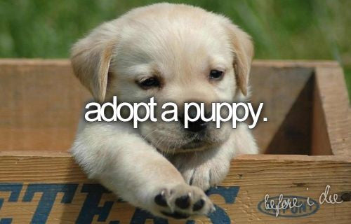 10 things to do before you die, bucket list ideas, adopt a puppy