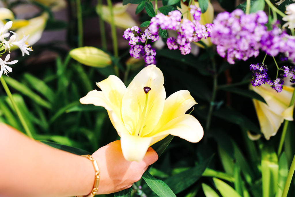 Beauty, stunning, gardening, flower, lily, perfection, summer, green thumb, blossom