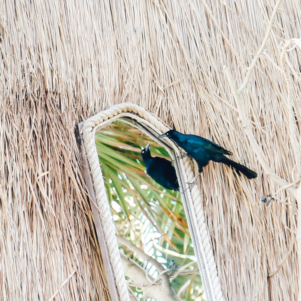 Bird, mirror, hut, reflection, straw, cabanna, beach house