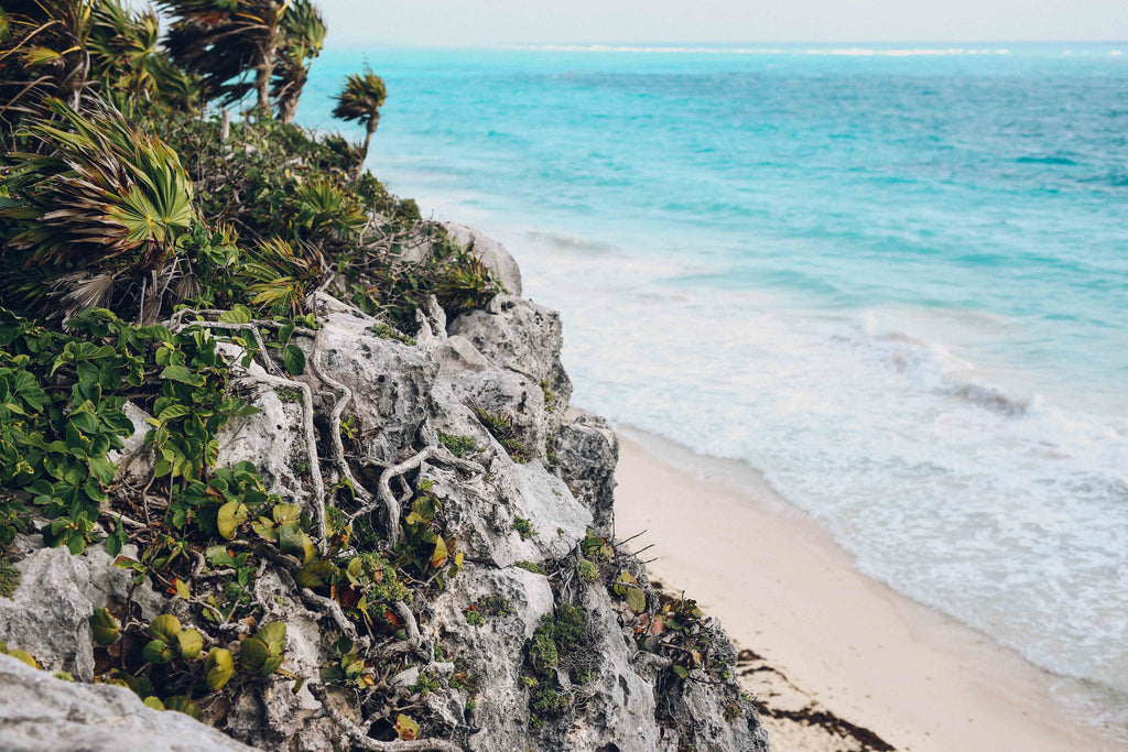 Cliff, ocean, blue, sand, beach, wind, mayan, ancient, civilization, explore, tour, caribbean, plant, greenery, inspiration, vines, mangrove