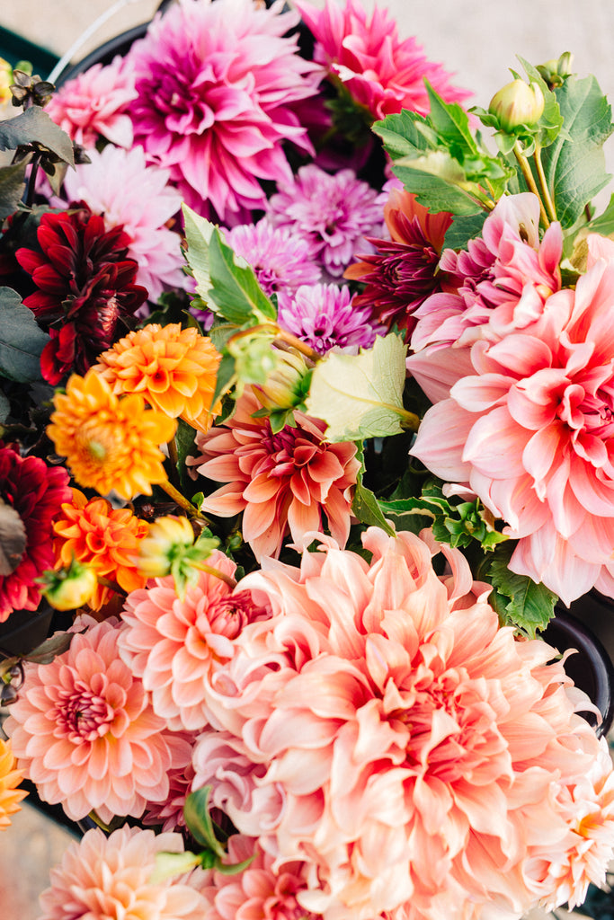 Field Of Dahlias Inspiration Behind Our Fall 2018 Collection