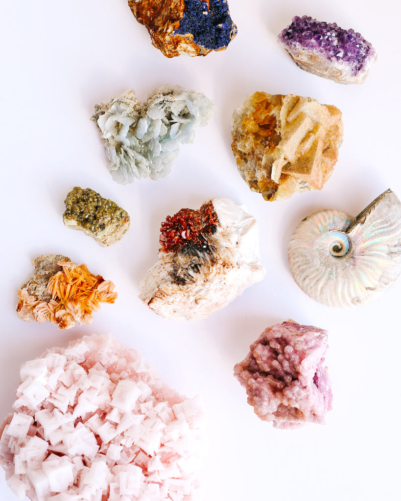 Collection, ammomite, fluorite, minerals, collector, fossilized