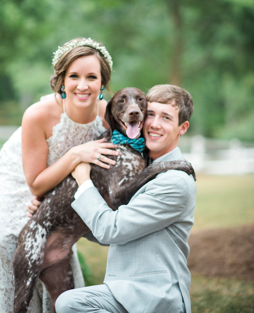 German Shorthaired Pointer, GSP, bowtie, dog, smile, ring bearer