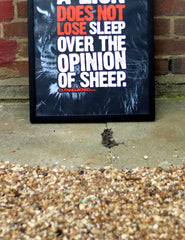 "A2 Poster - ""A Lion Does Not Lose Sleep Over The Opinion Of Sheep"" - CutAndJacked Shop  - 4"