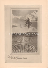 A Lone Sentinel of the Hawaiian Sunset palm tree 1929 original antique print Hawaii