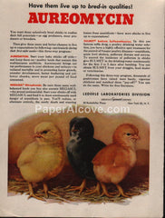 Aureomycin poultry antibiotic Lederle Laboratories 1953 vintage original old magazine ad American Cyanamid