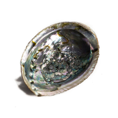 Abalone Shell - Beaded Dreams  - 1