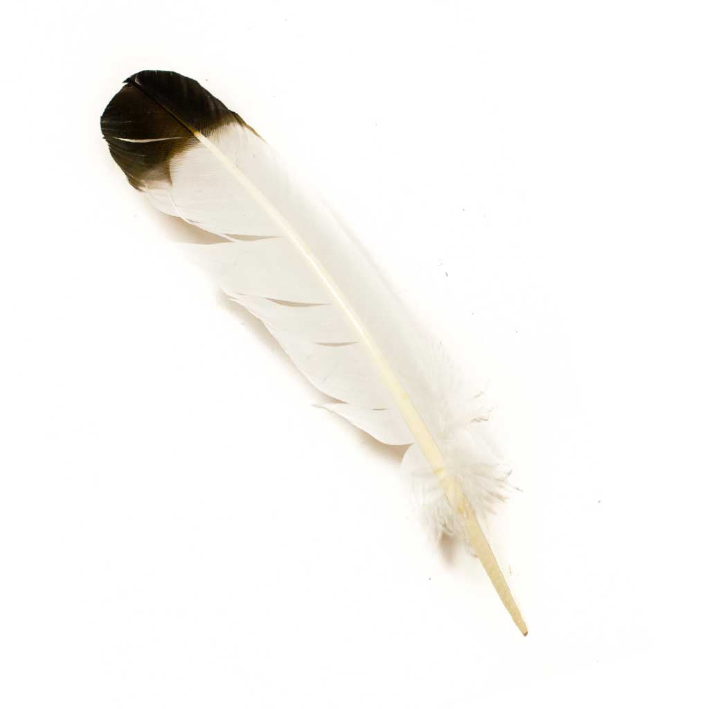 Turkey Feathers - Beaded Dreams  - 1