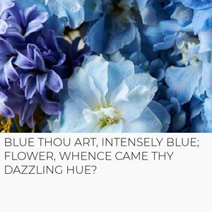 Classic Blue: Pantone Colour of the Year 2020