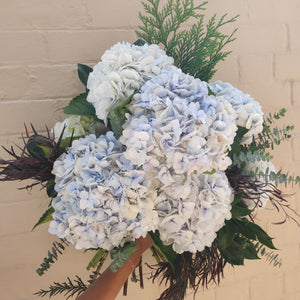 Local Hydrangeas
