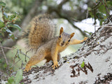 Cute Squirrel On a Tree / 100434