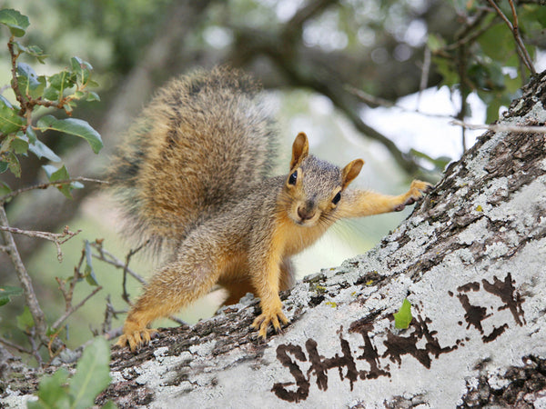Cute Squirrel On a Tree / 100434 - XMPie MARKETPLACE