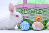 Easter Bunny and Basket / 100383
