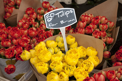 Tulips for Sale / 100757