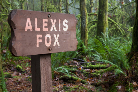 Wooden Sign In a Forest / 100448