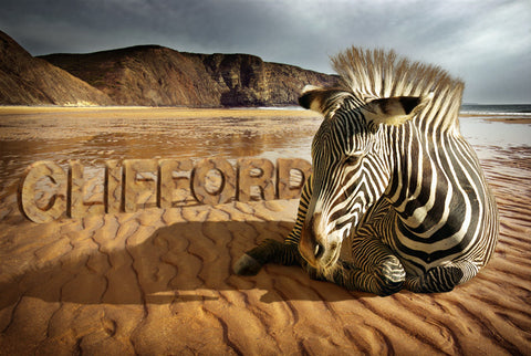 Zebra On the Beach / 100591