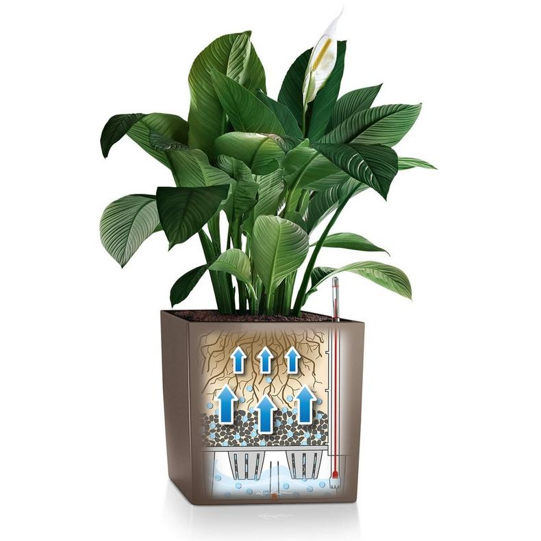 Lechuza Cube 30 Self-Watering Planter
