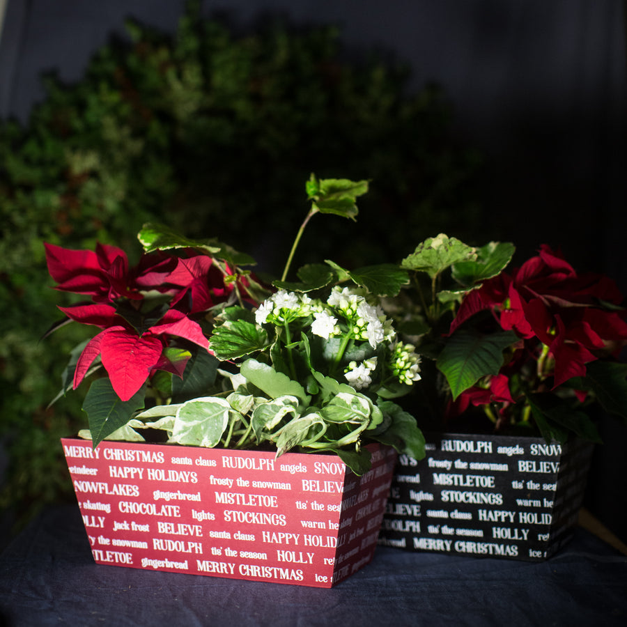 Holiday Words Mixed Christmas Planter 11x6""
