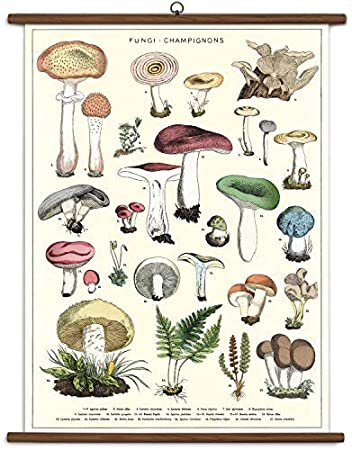 Mushrooms Vintage School Chart