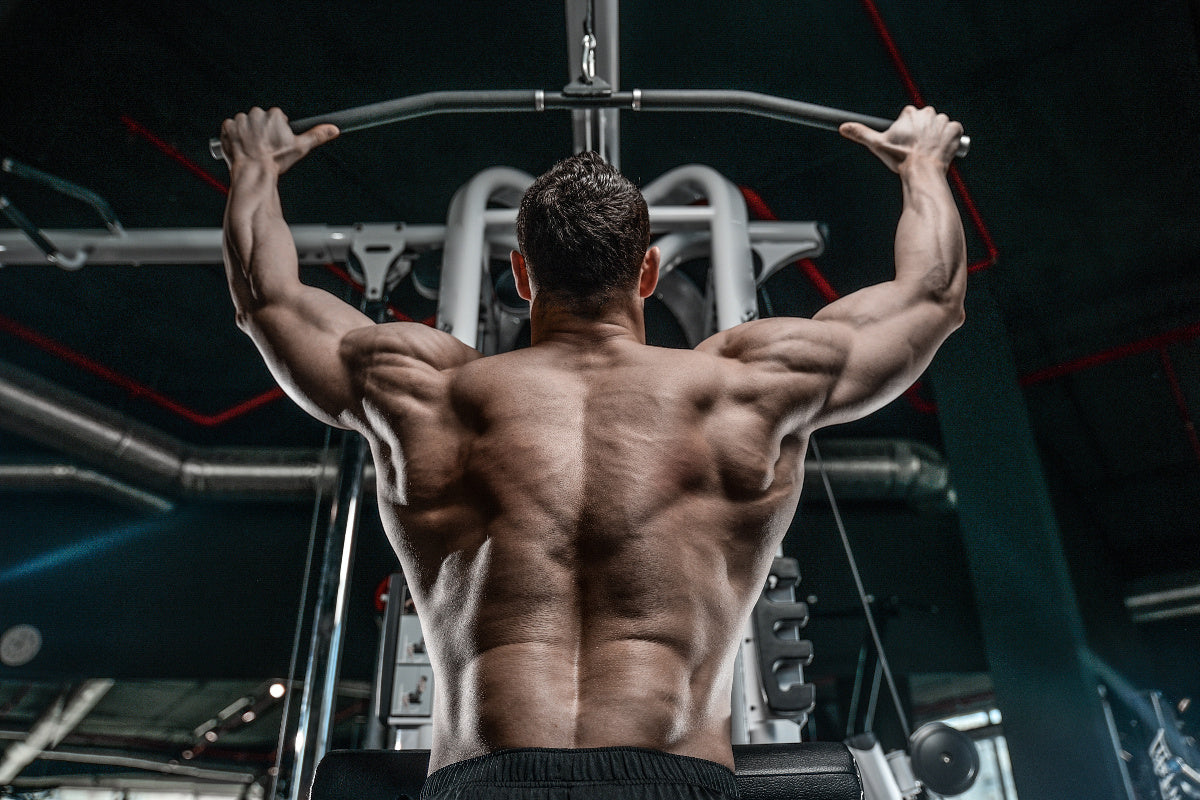 Back Workouts 101: Best Exercises For Bulging Back Muscles ...