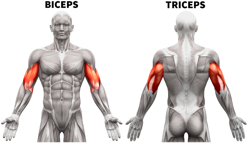 Arm Workouts 101 Best Exercises For Bigger Stronger Arms