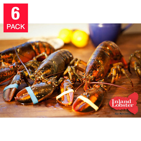 Live Maine Lobster 1.25 lbs each, 6-count