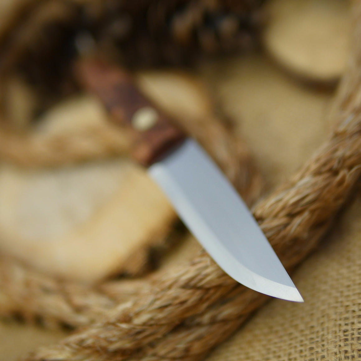 An Adventure Sworn Hiker lightweight bushcraft knife with redwood burl handle scales.