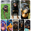 """Rottweiler Dog"" Hard Transparent Cover Case for iPhone 6/7"