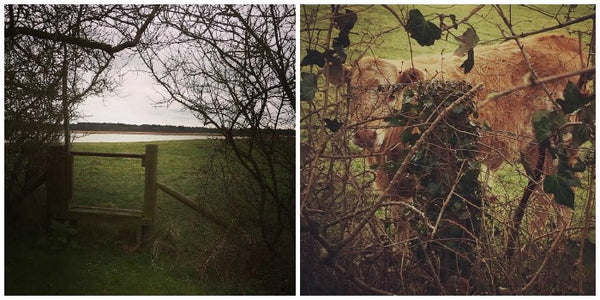 #1Day12Pics A country view and a camouflaged calf on the Yellow Lolly Blog